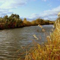 Золотятся осенние травы... :: Нэля Лысенко