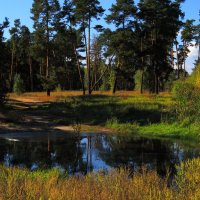 в лесу :: Василий Алехин