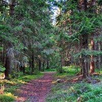 Сказочный лес :: Liliya Kharlamova
