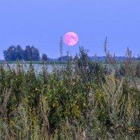 упадёт ли Медовая Луна или нет ? :: Георгий А