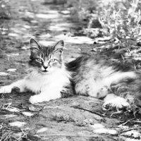 Кошка на проселочной дороге :: Игорь Попов
