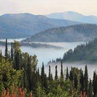 Речка укрылась туманом :: Сергей Чиняев