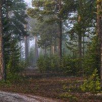 а в тайге по утрам туман... :: Татьяна .