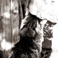 Кот. :: Эника.