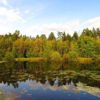 Тишина осеннего пруда :: Андрей Снегерёв