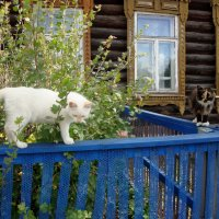 кошечки... :: Галина Флора