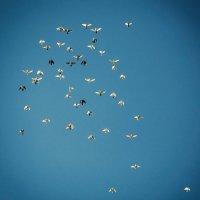 Странники неба :: Виталий Павлов
