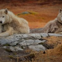 Повседневная жизнь гренландской деревушки :: Милана Гиличенски