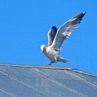 Танцы на крыше ... ) :: Елена Хайдукова  ( Elena Fly )