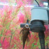 Чистит аквариум :: Герович Лилия