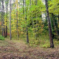 Осенний пасмурный день в Ал. парке ЦС - 3 :: Сергей
