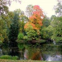 Осенний пасмурный день в Ал. парке ЦС - 5 :: Сергей