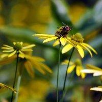 Привлекательные цветы :: Татьяна Иванова
