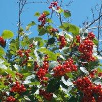 Еще не осень, но уже не лето :: Фотогруппа Весна-Вера,Саша,Натан
