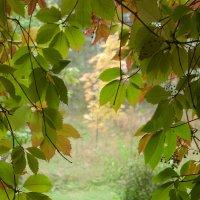 А в деревне осень... :: Kventin Natabos