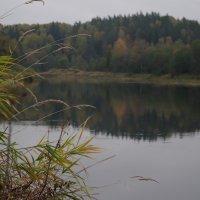 На Луге осень... :: Kventin Natabos