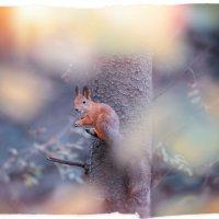 осень в лесу :: Эльмира Суворова