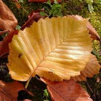 Осенний лист. :: Татьяна *
