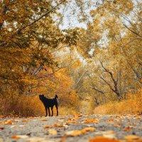 Прогулка по осенней дорожке. :: Ирэна Мазакина