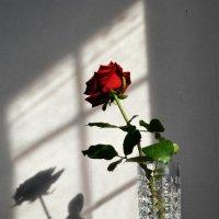 Вдвоём не так одиноко... :: ЛЮБОВЬ ВИТТ