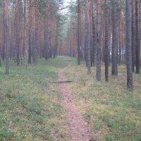 Осень :: Саша. Беликов