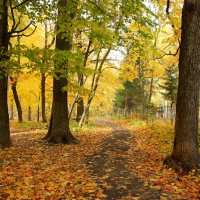 Осенняя природа :: Ната Волга