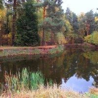 В лесу на пруду :: Андрей Снегерёв