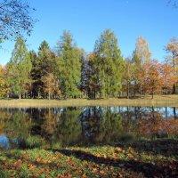 Пейзаж Гатчинского парка :: dli1953