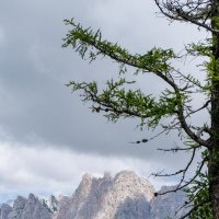 Доломитовые Альпы. Кортина д'Ампеццо. Вид с горы Фалория :: Надежда Лаптева