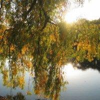 Ива над прудом :: Хвостища