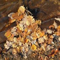 Остановка в пути ( прибило листья к берегу реки) :: Galina Solovova