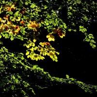 осенний свет :: Heinz Thorns