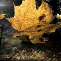Осенний улёт.... :: Андрей Войцехов
