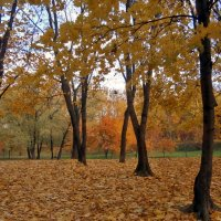 Осенняя пора очей очарованье... :: Ольга Довженко