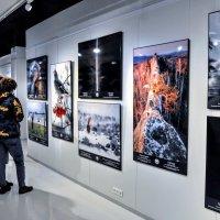 Выставка... :: Анатолий Колосов