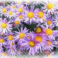 Осенние цветы :: Наталья Красильникова