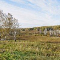 болотце,осень :: nataly-teplyakov