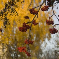 Красное на желтом :: Алексей Екимовских