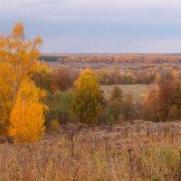 Осенние виды :: Андрей Зайцев