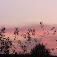 Розовые сумерки августа :: Антонина Балабанова