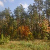 Осень пришла :: PRP