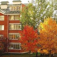 Соколово-Мещерская. Три цвета осени :: Ирина Via
