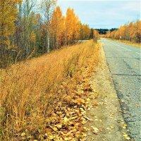 Дорога в осень (2) :: Алла ZALLA