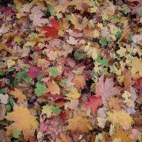 Под ногами осень :: Марина Птичка
