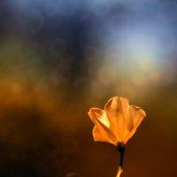 Одинокий цветочек :: Виктор Мороз