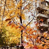 Осенний день :: Ирина Коноплёва