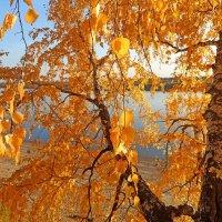 Золотая осень :: OlesiaVS .
