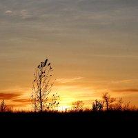 Осенний закат :: Nina Karyuk
