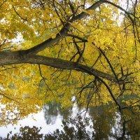 Осень :: Хвостища