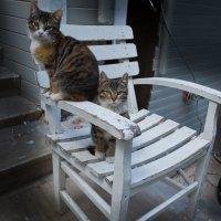 Истанбульские коты :: Андрей ТOMА©